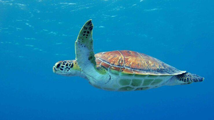 Zakynthos Turtle Island