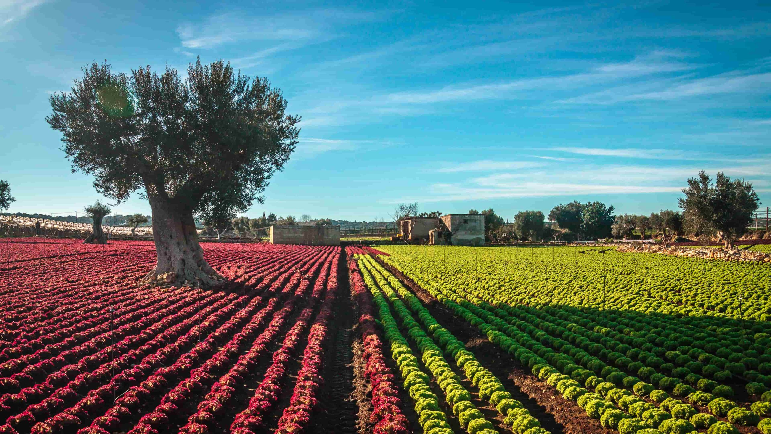 Puglia olijfolie proeven