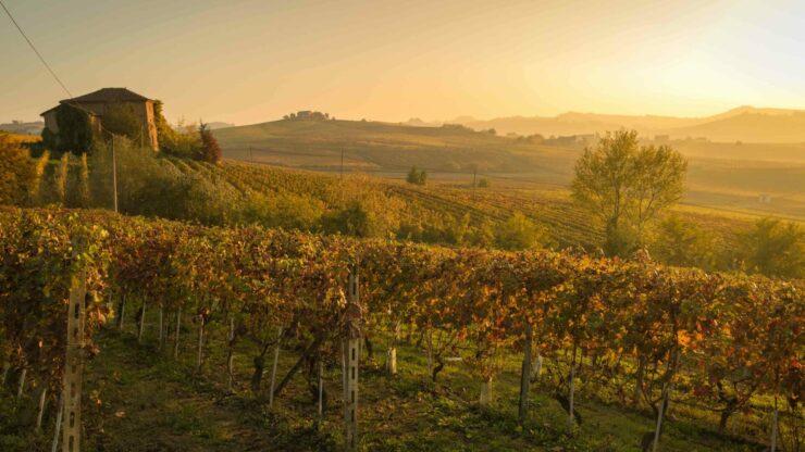 Italie Barolo wijn