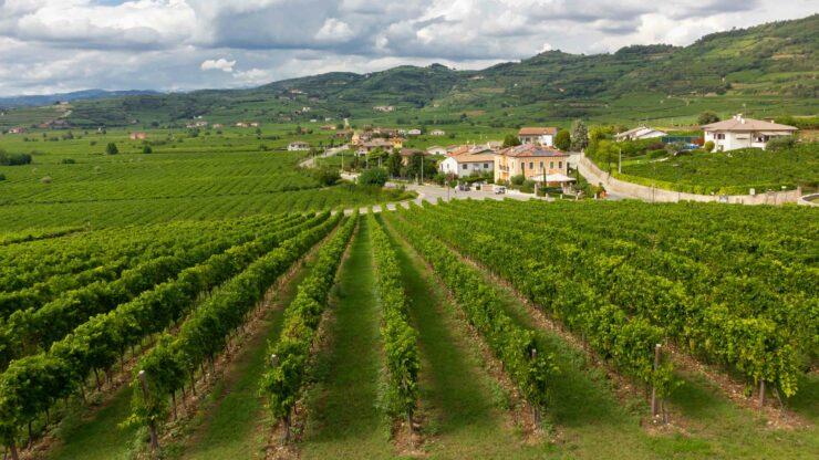 Italie wijn Soave