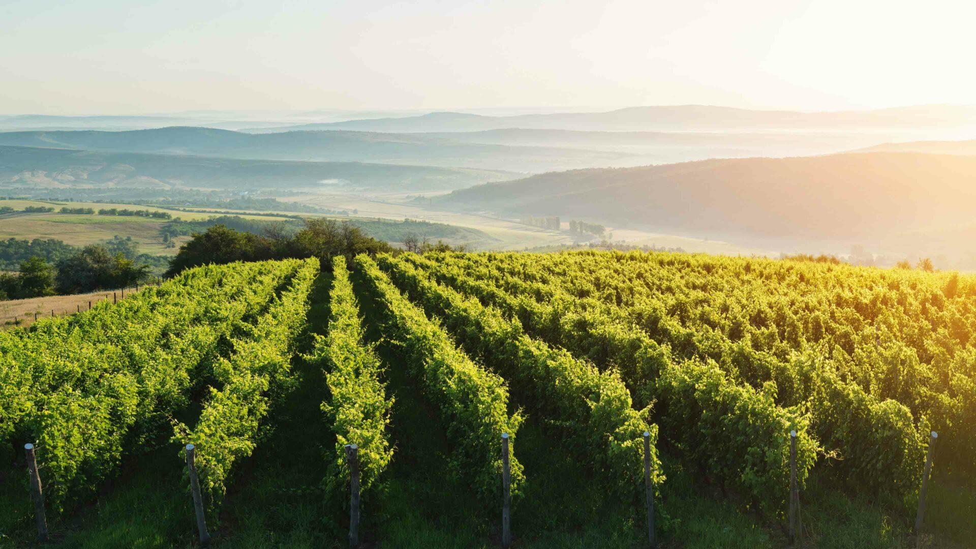 Wijnstreken in Italië