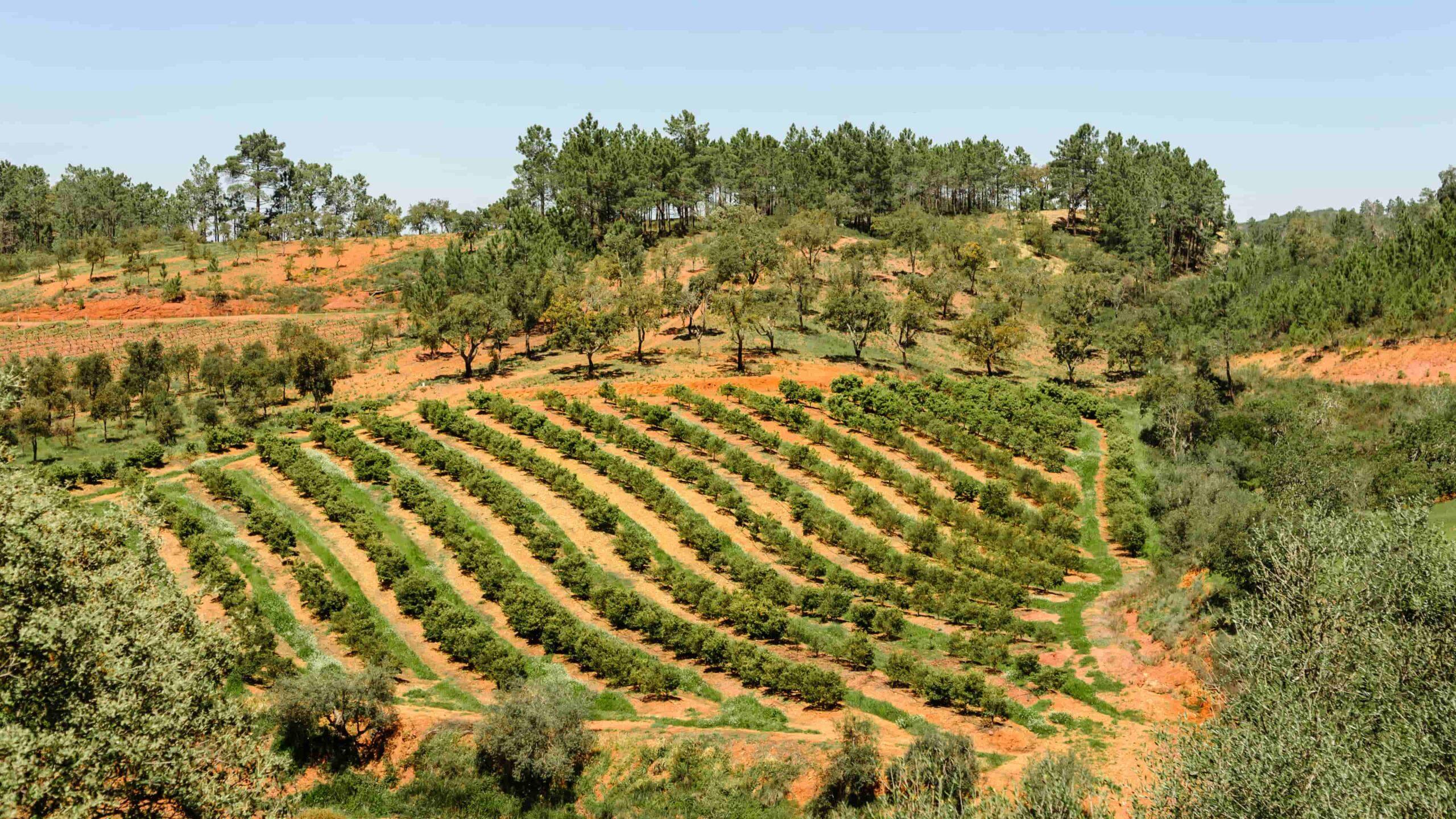 Wijnstreken Algarve Portugal