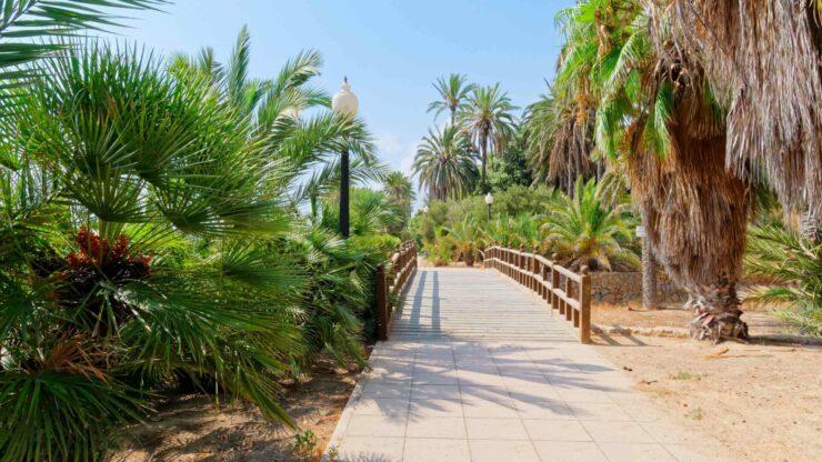 Alicante Park el Palmeral