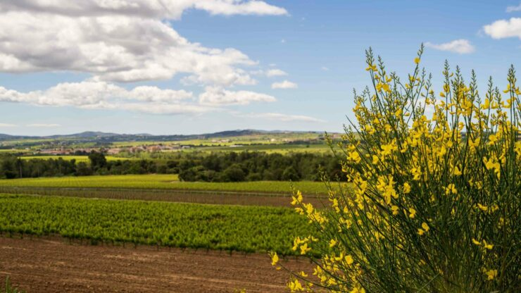 Catalonie Penedes wijngaarden